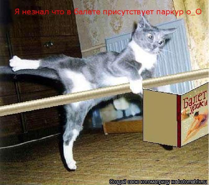 Котоматрица: Я незнал что в балете присутствует паркур о_О