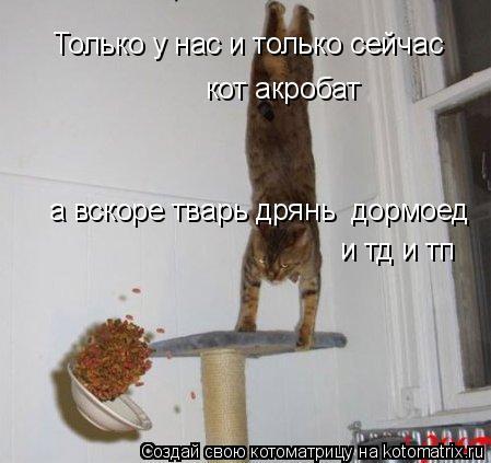 Котоматрица: Только у нас и только сейчас кот акробат а вскоре тварь дрянь  дормоед  и тд и тп