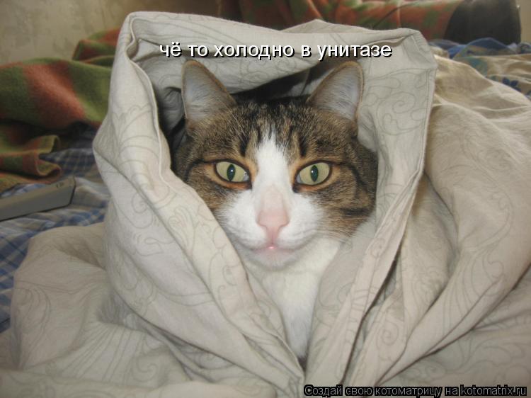 Котоматрица: чё то холодно в унитазе