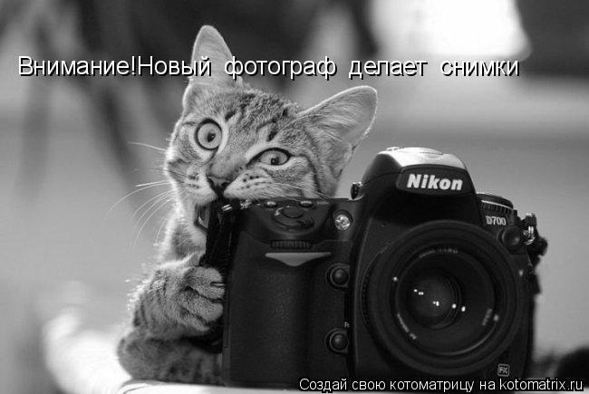 Котоматрица: Внимание!Новый  фотограф  делает  снимки