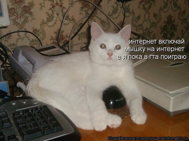 Котоматрица: интернет включай мышку на интернет а я пока в гта поиграю
