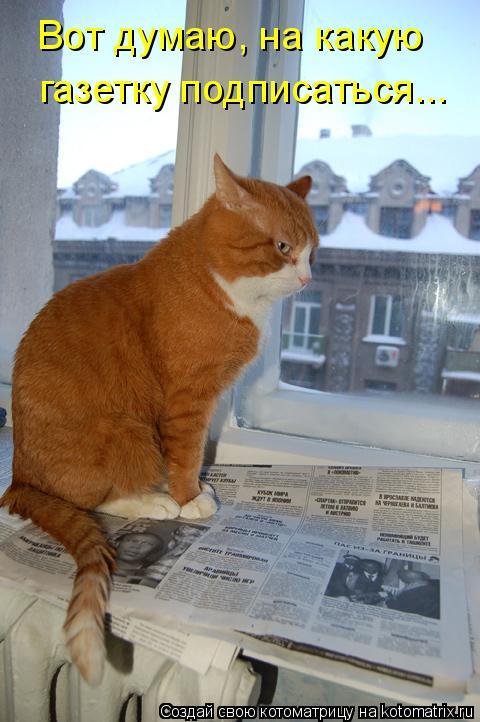 Котоматрица: Вот думаю, на какую газетку подписаться...