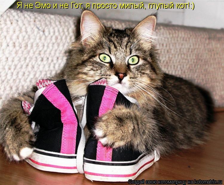 Котоматрица: Я не Эмо и не Гот, я просто милый, глупый кот!:)
