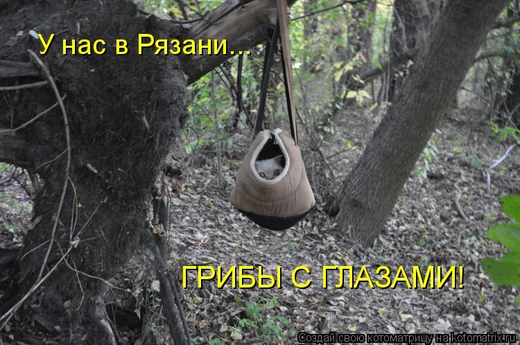 Котоматрица: У нас в Рязани... ГРИБЫ С ГЛАЗАМИ!
