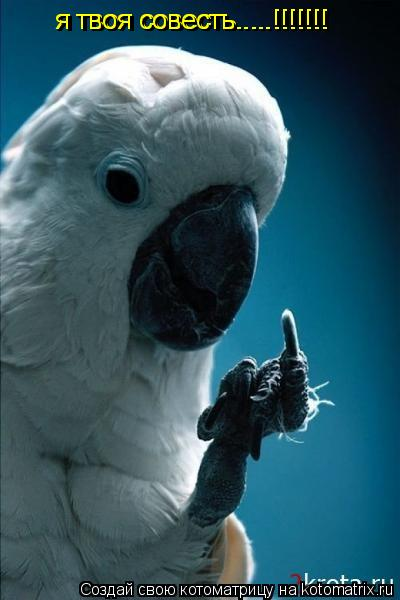 Котоматрица: я твоя совесть.....!!!!!!! я твоя совесть.....!!!!!!!