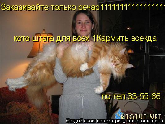Котоматрица: Заказивайте только сечас11111111111111111111111111111111111!!!!!!!!!!!!!!!!!!!1 кото штага для всех 1 кото штага для всех 1 кото штага для всех 1Карми