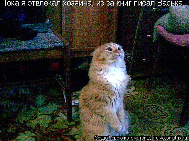 Котоматрица: Пока я отвлекал хозяина, из за книг писал Васька!