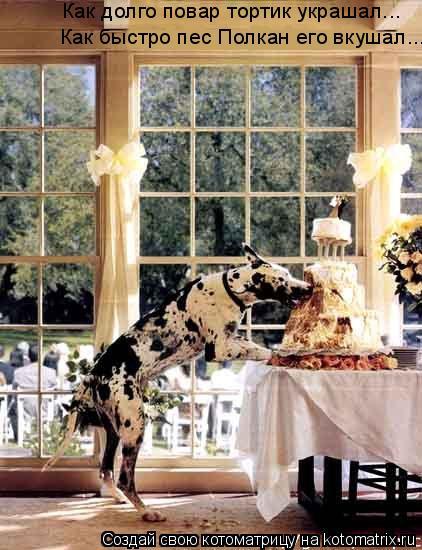 Котоматрица: Как долго повар тортик украшал... Как быстро пес Полкан его вкушал...
