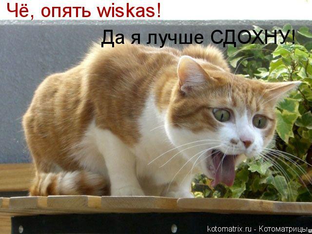 Котоматрица: Чё, опять wiskas! Да я лучше СДОХНУ!