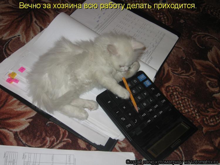 Котоматрица: Вечно за хозяина всю работу делать приходится.