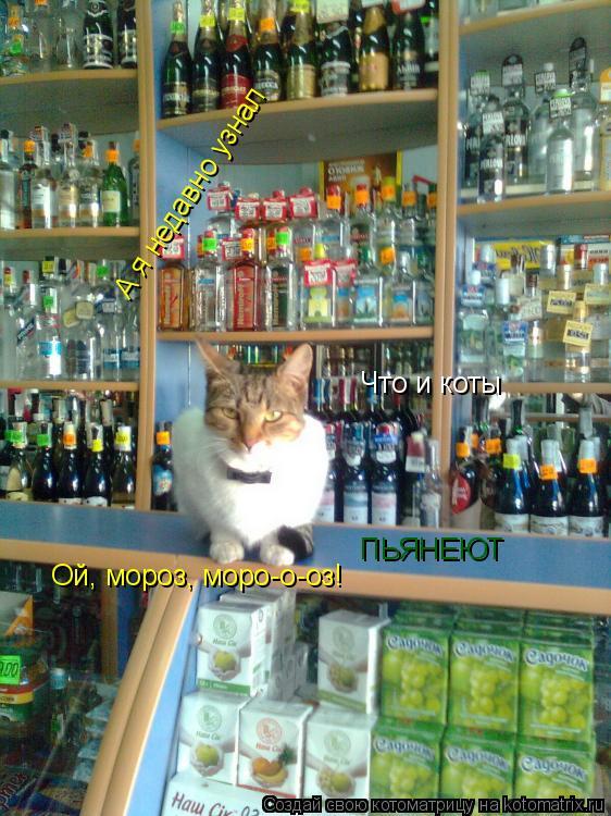 Котоматрица: А я недавно узнал Что и коты ПЬЯНЕЮТ Ой, мороз, моро-о-оз!