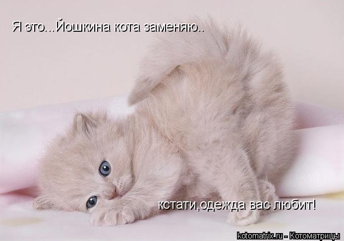 Котоматрица: Я это...Йошкина кота заменяю.. кстати,одежда вас любит!