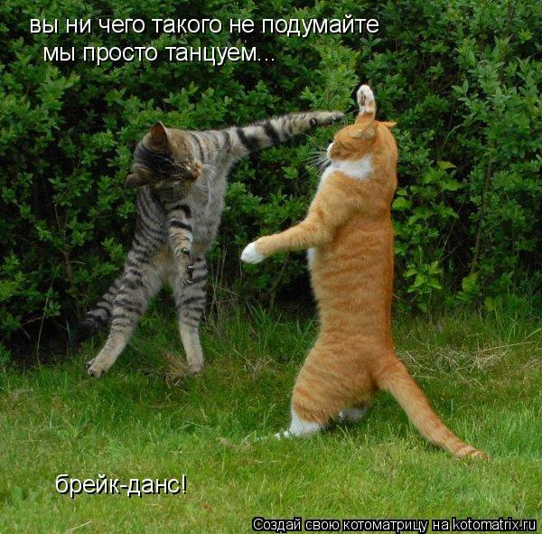 Котоматрица: вы ни чего такого не подумайте  вы ни чего такого не подумайте  мы просто танцуем... брейк-данс!