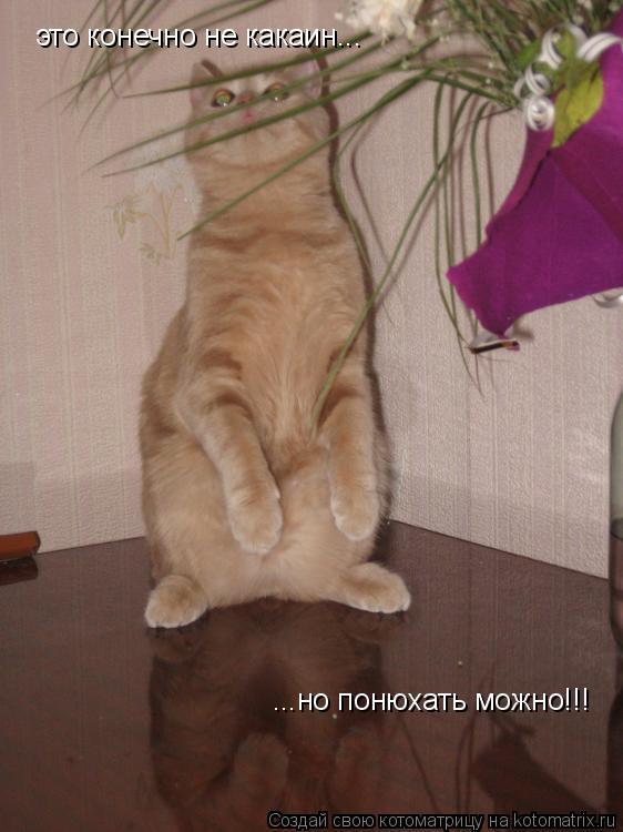 Котоматрица: это конечно не какаин... ...но понюхать можно!!!