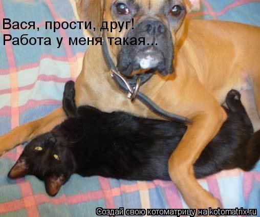 Котоматрица: Вася, прости, друг! Работа у меня такая...