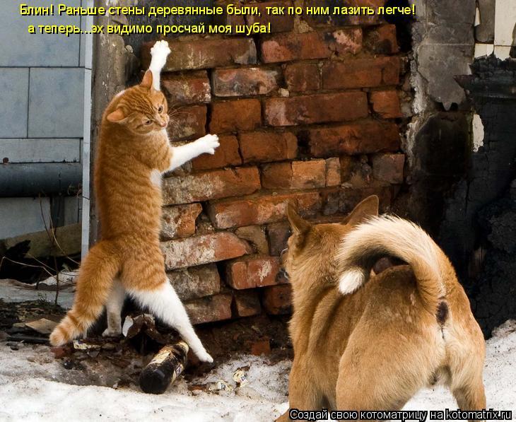 Котоматрица: Блин! Раньше стены деревянные были, так по ним лазить легче! а теперь...эх видимо просчай моя шуба!