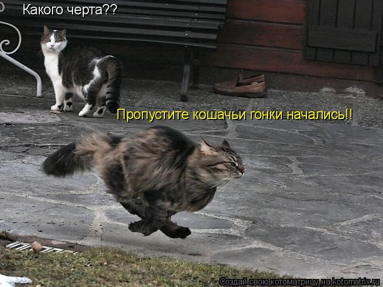 Котоматрица: Какого черта??  Пропустите кошачьи гонки начались!!