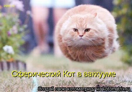Котоматрица: Сферический Кот в ваккууме