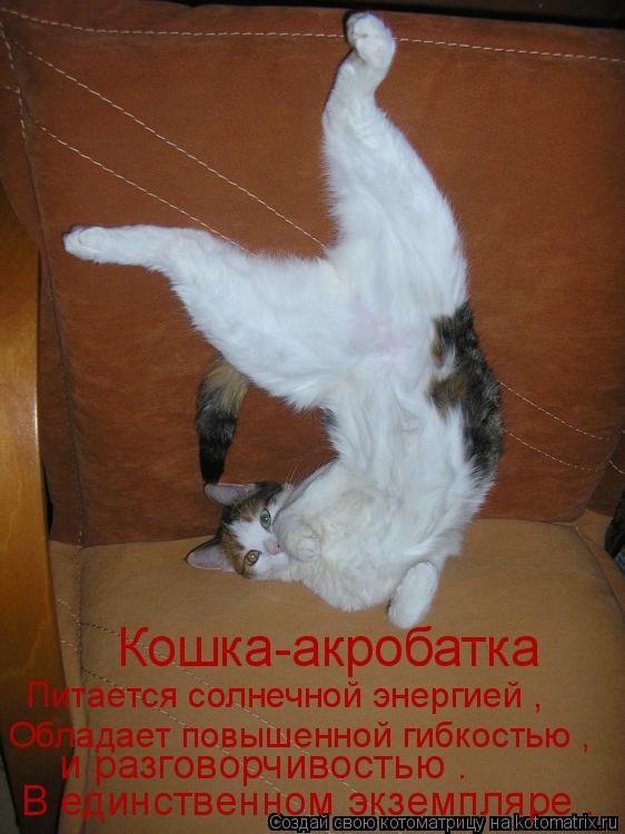 Котоматрица: Кошка-акробатка Питается солнечной энергией , Обладает повышенной гибкостью , и разговорчивостью .  В единственном экземпляре .