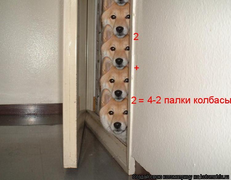 Котоматрица: 4-2 палки колбасы. + 2 2 =