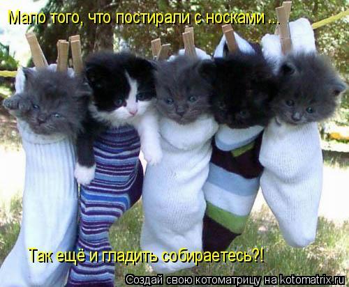 Котоматрица: Мало того, что постирали с носками ... Так ещё и гладить собираетесь?!