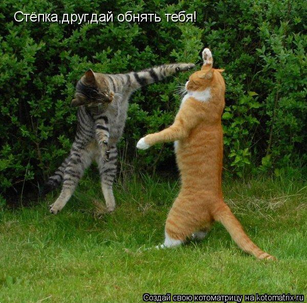 Котоматрица: Стёпка,друг,дай обнять тебя!