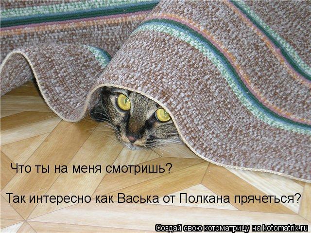 Котоматрица: Что ты на меня смотришь? Так интересно как Васька от Полкана прячеться?