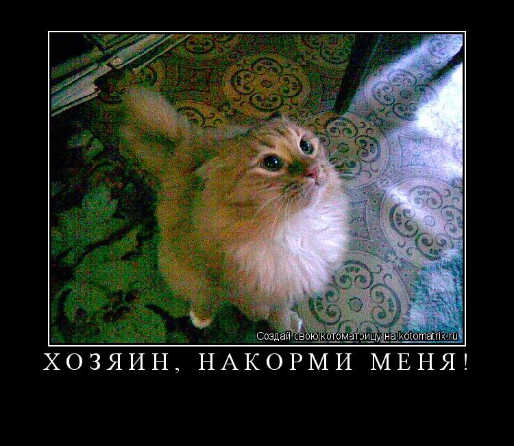 Котоматрица: хозяин, накорми меня!