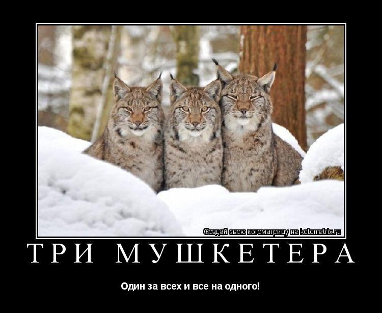 Котоматрица: Три мушкетёра Один за всех и все на одного!