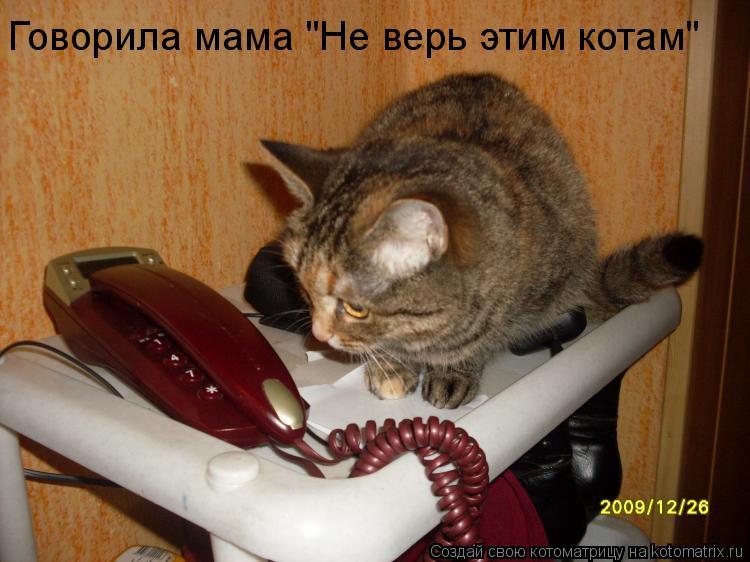 """Котоматрица: Говорила мама """"Не верь этим котам"""""""