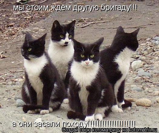 Котоматрица: мы стоим ждём другую бригаду!!! а они засали походу!!!!!!!!!!!!!!!!!!!!