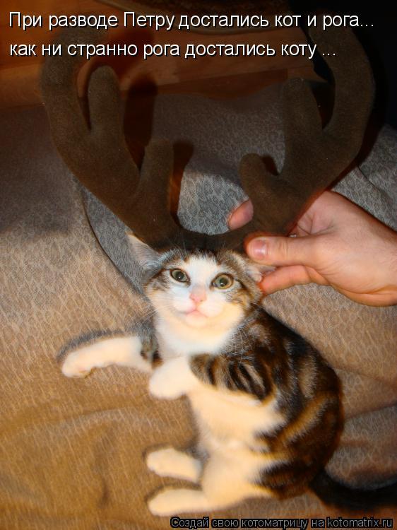 Котоматрица: При разводе Петру достались кот и рога... как ни странно рога достались коту ...