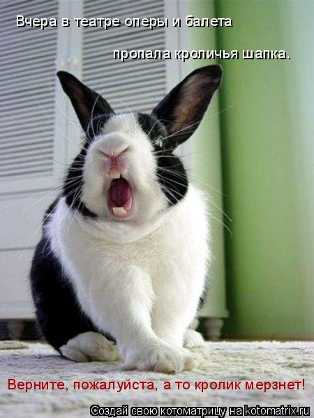 Котоматрица: Вчера в театре оперы и балета пропала кроличья шапка. Верните, пожалуйста, а то кролик мерзнет!