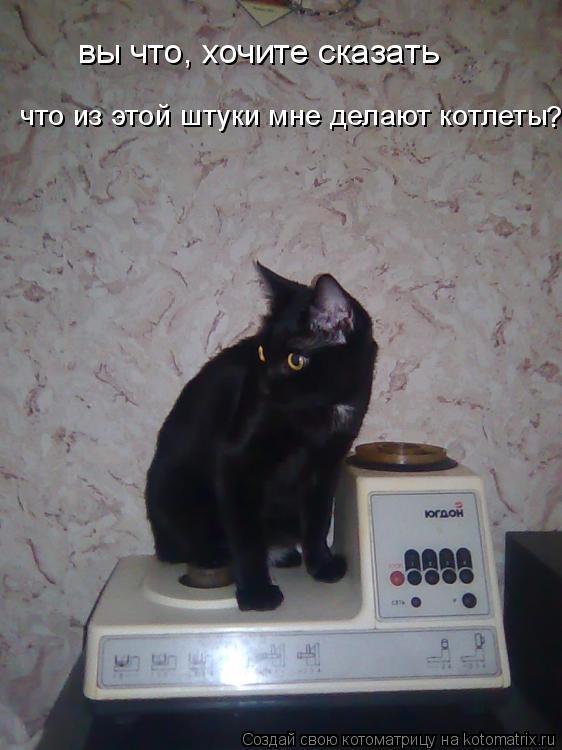 Котоматрица: вы что, хочите сказать что из этой штуки мне делают котлеты ?
