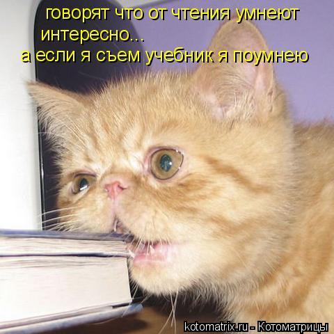 Котоматрица: говорят что от чтения умнеют  интересно... а если я съем учебник я поумнею