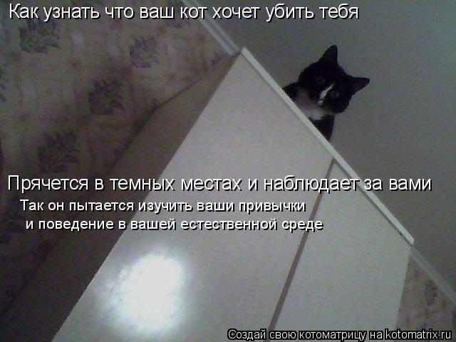 Котоматрица: Как узнать что ваш кот хочет убить тебя Прячется в темных местах и наблюдает за вами Так он пытается изучить ваши привычки  и поведение в ва