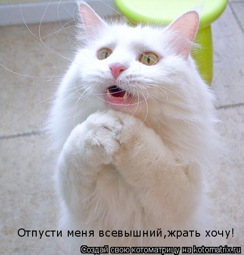 Котоматрица: Отпусти меня всевышний,жрать хочу!