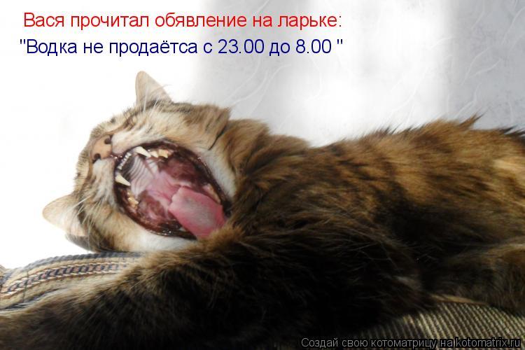 """Котоматрица: Вася прочитал обявление на ларьке: """"Водка не продаётса с 23.00 до 8.00 """""""