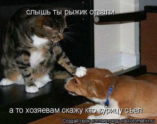 Котоматрица: слышь ты рыжик отвали  а то хозяевам скажу кто курицу съел