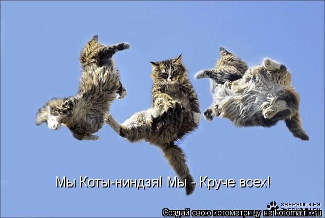 Котоматрица: Мы Коты-ниндзя! Мы - Круче всех! Нашу команду ждёт успех! Мы Коты-ниндзя! Мы - Круче всех!  Мы Коты-ниндзя! Мы - Круче всех!