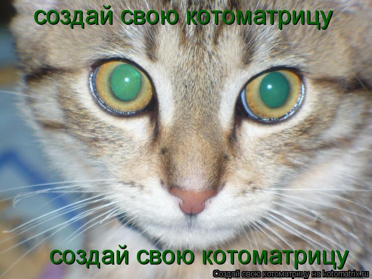 Котоматрица: создай свою котоматрицу создай свою котоматрицу