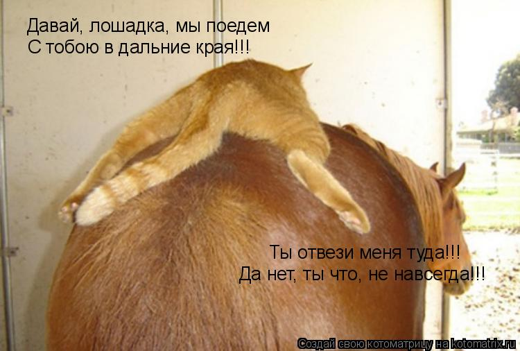 Котоматрица: Давай, лошадка, мы поедем С тобою в дальние края!!! Ты отвези меня туда!!! Да нет, ты что, не навсегда!!!