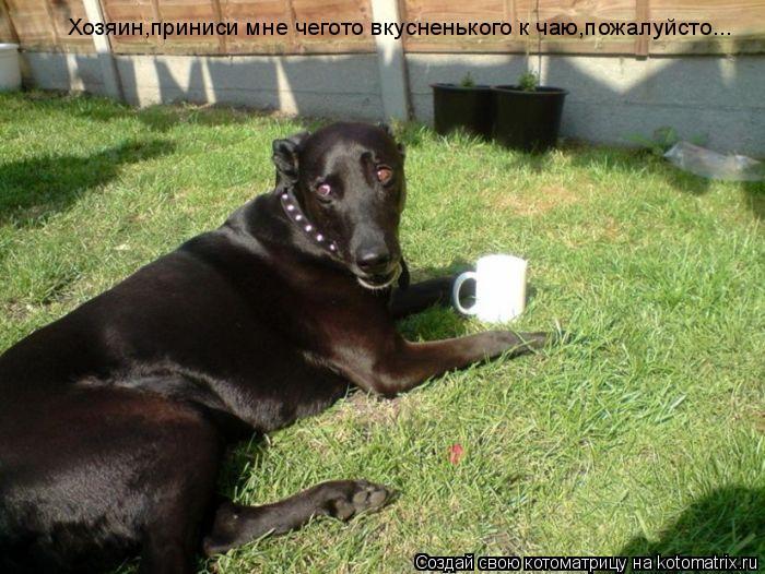 Котоматрица: Хозяин,приниси мне чегото вкусненького к чаю,пожалуйсто...