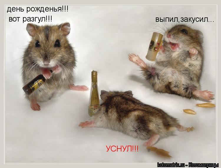 Котоматрица: день рожденья!!! вот разгул!!! выпил,закусил... УСНУЛ!!!