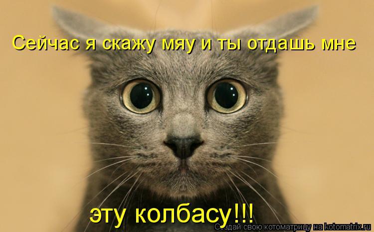 Котоматрица: Сейчас я скажу мяу и ты отдашь мне эту колбасу!!!