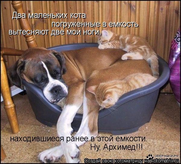 Котоматрица: Два маленьких кота  погруженные в емкость вытесняют две мои ноги, находившиеся ранее в этой емкости. Ну, Архимед!!!