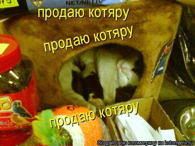 Котоматрица: продаю котяру продаю котяру продаю котяру