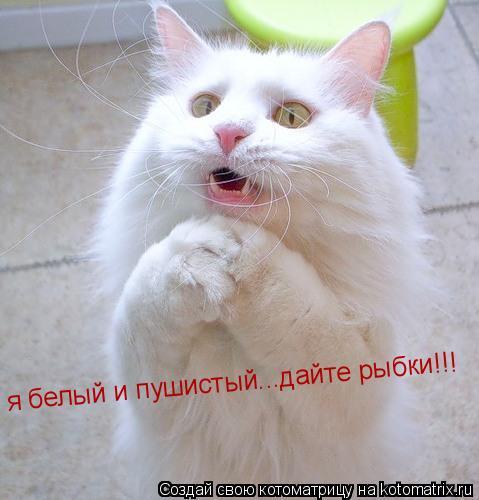 Котоматрица: я белый и пушистый...дайте рыбки!!!(кошачий гипноз) я белый и пушистый...дайте рыбки!!!
