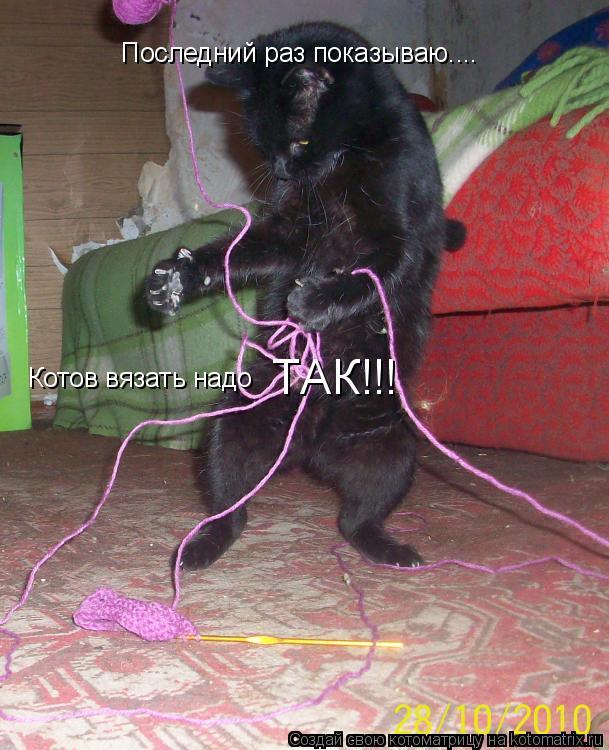 Котоматрица: Последний раз показываю.... Котов вязать надо  ТАК!!!