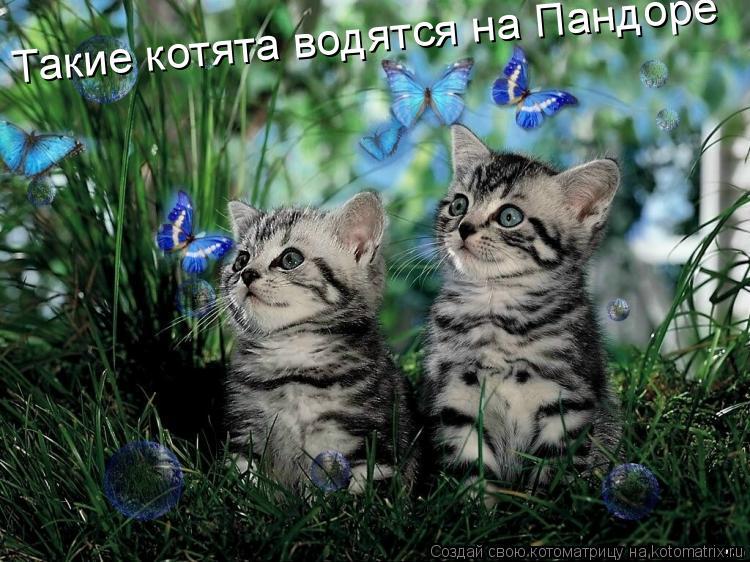 Котоматрица: Такие котята водятся на Пандоре